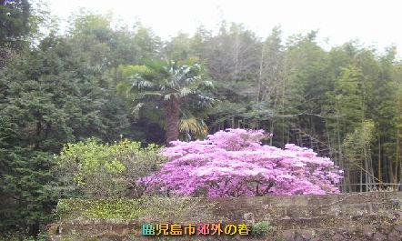 top_201003