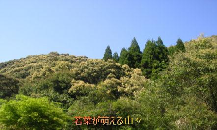 kagoshima201405